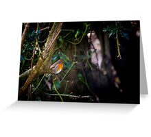 Robin in Holly Tree Greeting Card