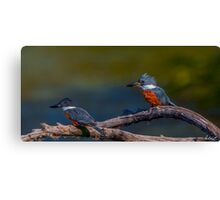 Ringed Kingfishers-Digital Oil Canvas Print