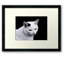 Cat Portrait VRS2 Framed Print