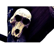 Old Skull Photographic Print