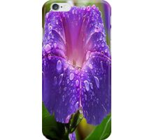 Morning Glory (Ipomoea Purpurea) Petals and Dew Drops  iPhone Case/Skin