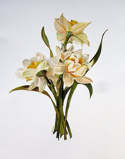 Double Narcissi by taiche