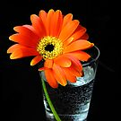 glass of flower by studenna