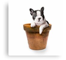 Potted Pooch Canvas Print