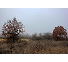 Last Remnant of Fall Photographic Print