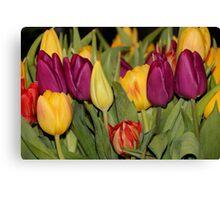 An Ocean Full Of Tulips III Canvas Print