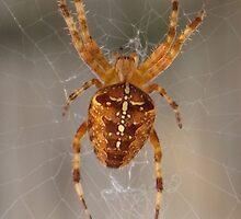 Spider  by IanWeston