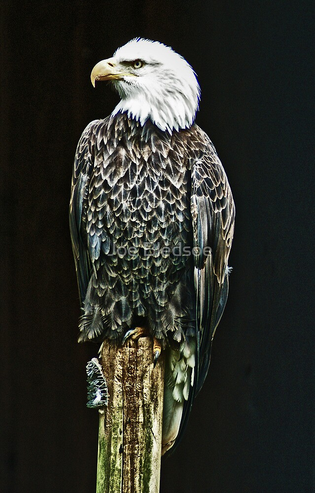 On the Lookout by Joe Bledsoe