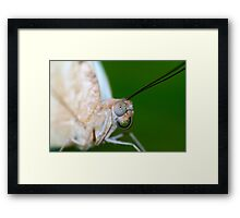 Macro of a butterfly  Framed Print
