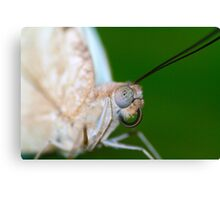Macro of a butterfly  Canvas Print