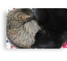 Yin and Yang (Cat style) Canvas Print