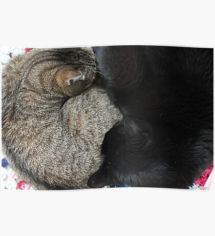 Yin and Yang (Cat style) Poster