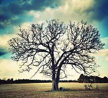 Tree In Field on Lamb's Bridge by doycave