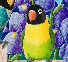 Black-faced Lovebirds by jkartlife