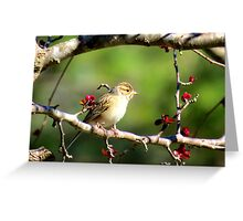 cute little feathered visitor Greeting Card