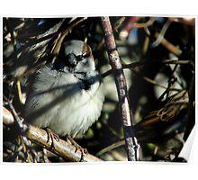 Sparrow Hiding Poster