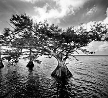 cypress by tammy lee bradley