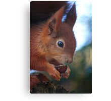 Red Squirrel at Pensthorpe Canvas Print