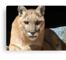 Mountain Lion Face Canvas Print