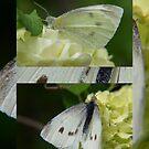 flutter by by byzantinehalo