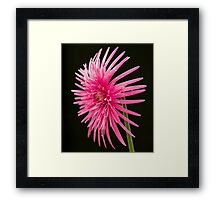 Life of  a Beauty Framed Print