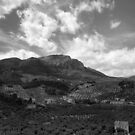 Olive Groves by Gutesdesignist