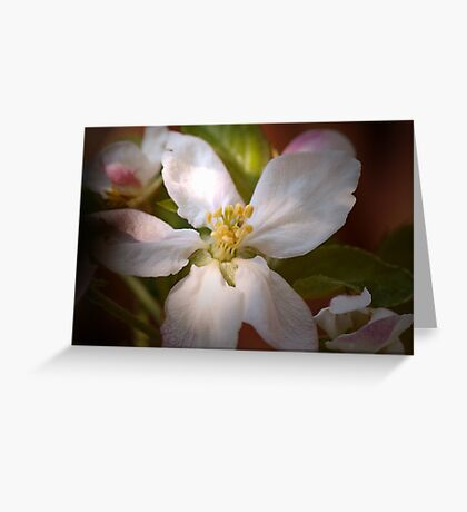 Apple blossoms in Spring sun Greeting Card