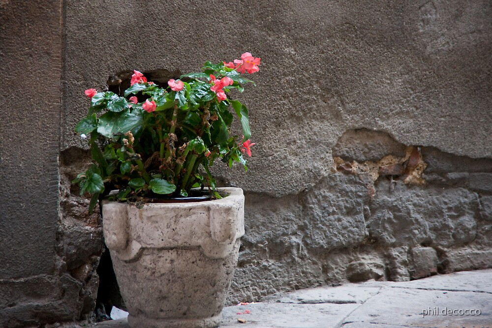 Begonias In the Alley by phil decocco