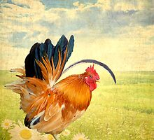 Mr. Rooster Greets the Day by Lisa Knechtel