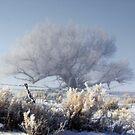Enchanted Morning by Arla M. Ruggles