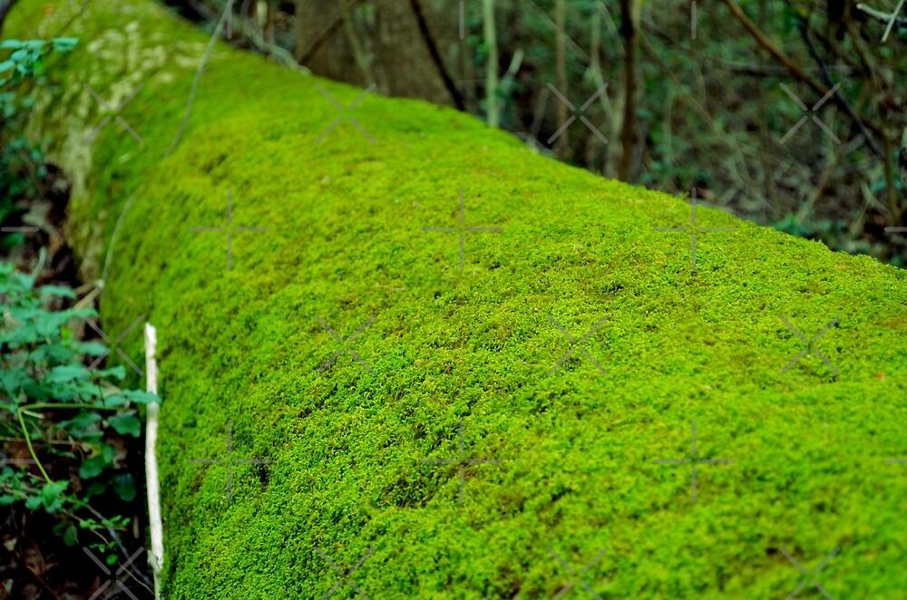 Woodland Carpet by Scott Mitchell