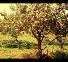 How 'bout them apples? by Jeremy Jorgensen