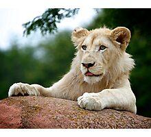 Lion Cub Dry Brush Photographic Print