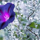 Purple Flower on White by east212