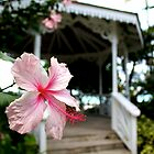 Hibiscus Flower in front of a Gazebo by PrecisionImages