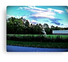 Danger In The Reeds Canvas Print