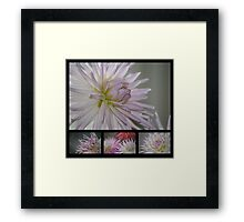 A Study in Lilac Framed Print