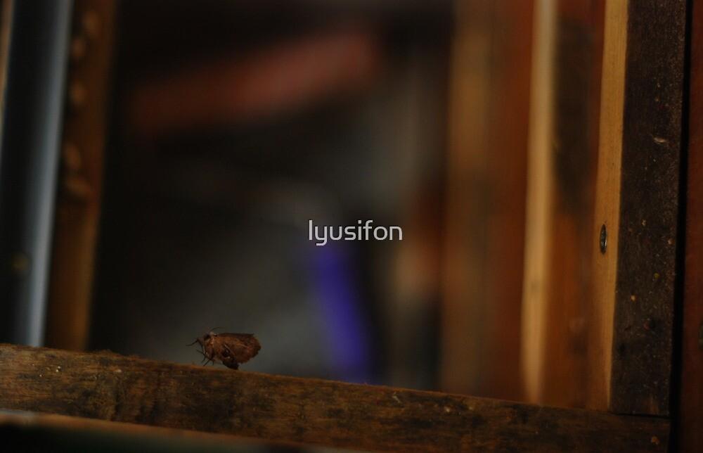 Herbarium by lyusifon