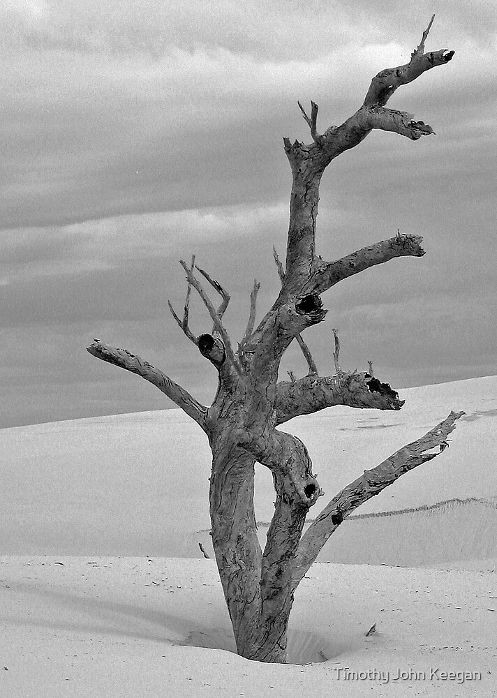 Buried by the dunes by Timothy John Keegan