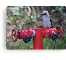 Kookaburra on Red Canvas Print