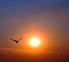 """""""FLYING BACK HOME"""" by vikrant"""