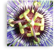 Close Up of The Centre Of a Passiflora Flower Canvas Print
