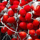 Manila Palm Red by Inez Wijker