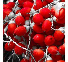 Manila Palm Red Photographic Print