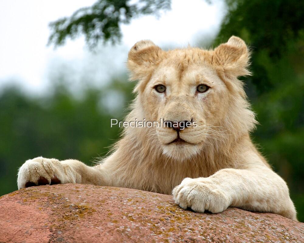 White Lion Cub by PrecisionImages