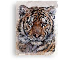Tiger 779 Canvas Print