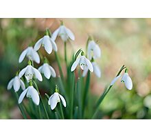 Simply Spring Photographic Print