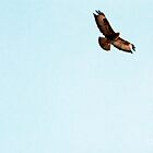 is it a bird? is it a plane? it's a buzzard. by loutolou