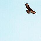 is it a bird? is it a plane? it's a buzzard. by loutolou