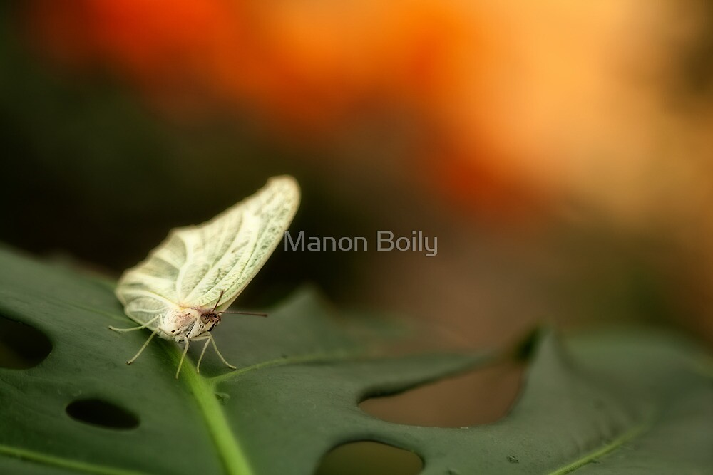 do I know you? by Manon Boily